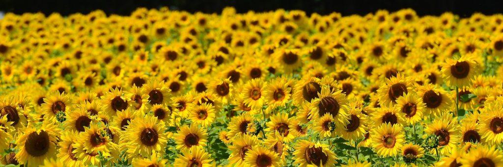 Umweltschutz in Schwarz Gelb – Das Prinzip Umwelt Taxi